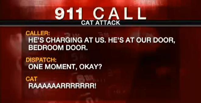 911-call-gato-enfurecido