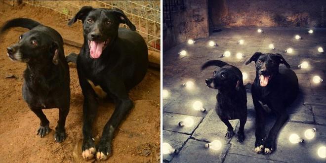 surreal-photography-shelter-dogs-sarolta-ban-10b
