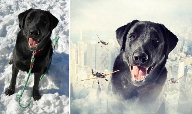 surreal-photography-shelter-dogs-sarolta-ban-2