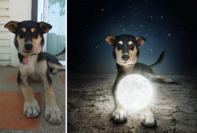 surreal-photography-shelter-dogs-sarolta-ban-4b (1)