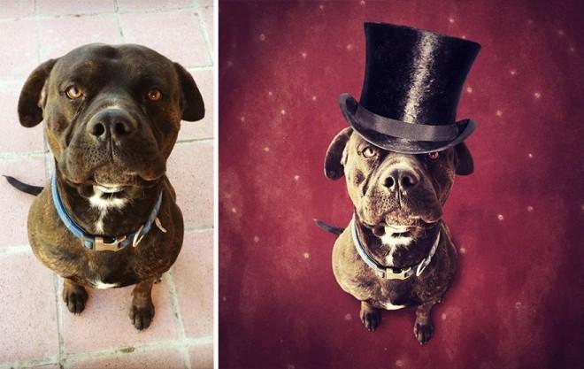surreal-photography-shelter-dogs-sarolta-ban-7b
