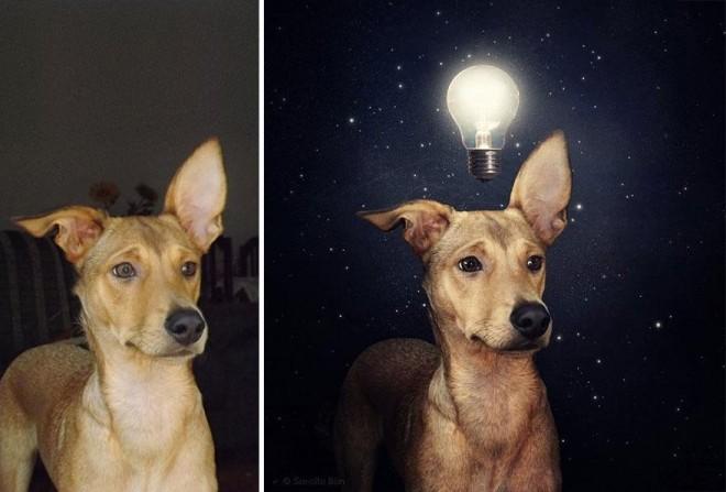 surreal-photography-shelter-dogs-sarolta-ban-9b